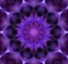 purpleflower5.jpg