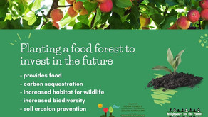 Planting a food forest to invest in the future