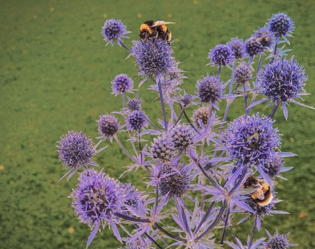 CREATING HABITAT GARDENS FOR NATIVE POLLINATORS IN THE GREATER TORONTO AREA