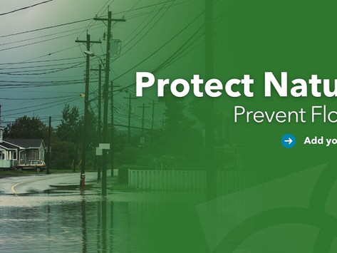 Protect Nature. Prevent Floods.