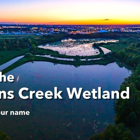 Tell MPP Peter Bethlenfalvy to stop paving over our wetlands