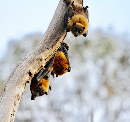 Tues Aug 25, 6:30pm - All About Bats