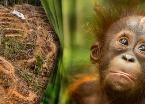 EU: BAN FOREST-KILLING PRODUCTS