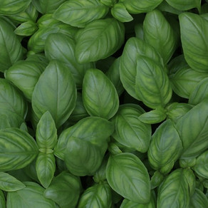 How to Preserve Basil: 16 Recipes to Enjoy Fresh Basil All Year Long