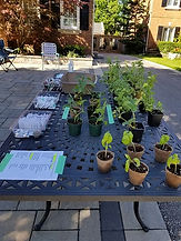 NftP Curbside Seed Event - June 8  - Cop