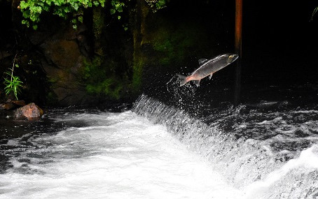 Heat stress that killed thousands of salmon in Alaska is a sign of things to come, scientist warns