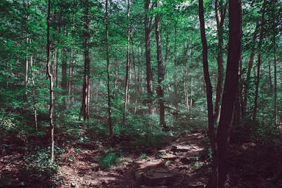 Trees go viral by Martin Bush