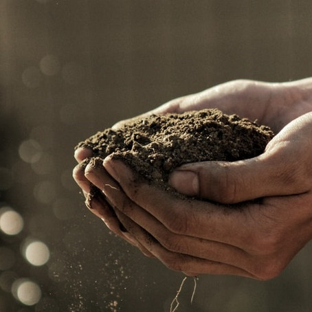 Soil Food: The Best Dirt Cheap Organic Soil Amendments
