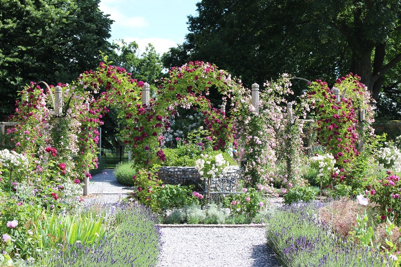 A circle of pergolas covered in blooming roses