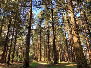 BOLDERWOOD AND THE DEER SANCTUARY IN THE NEW FOREST