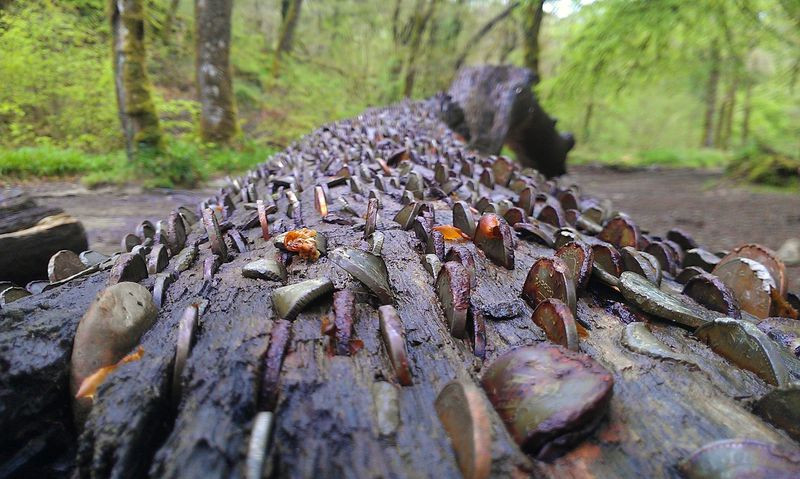 Coins in a dead tree trunk
