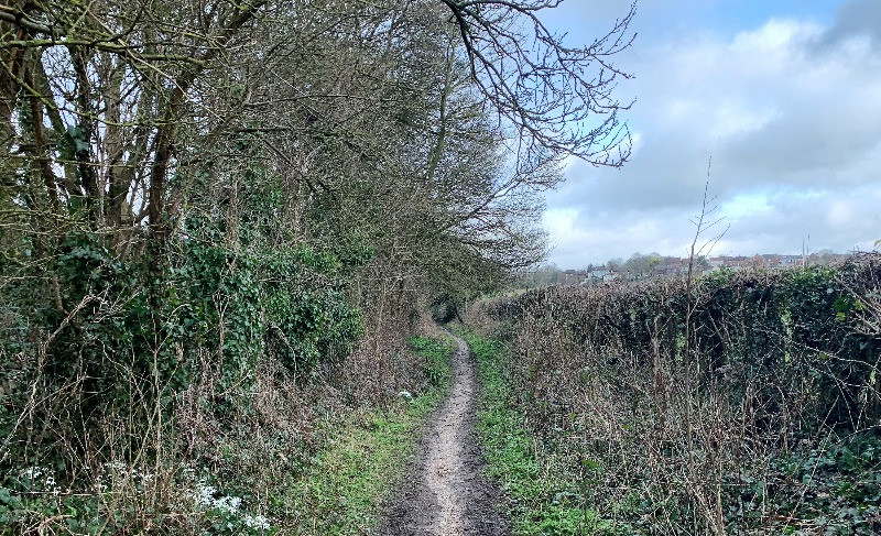 The hedge lined track that is the Portway