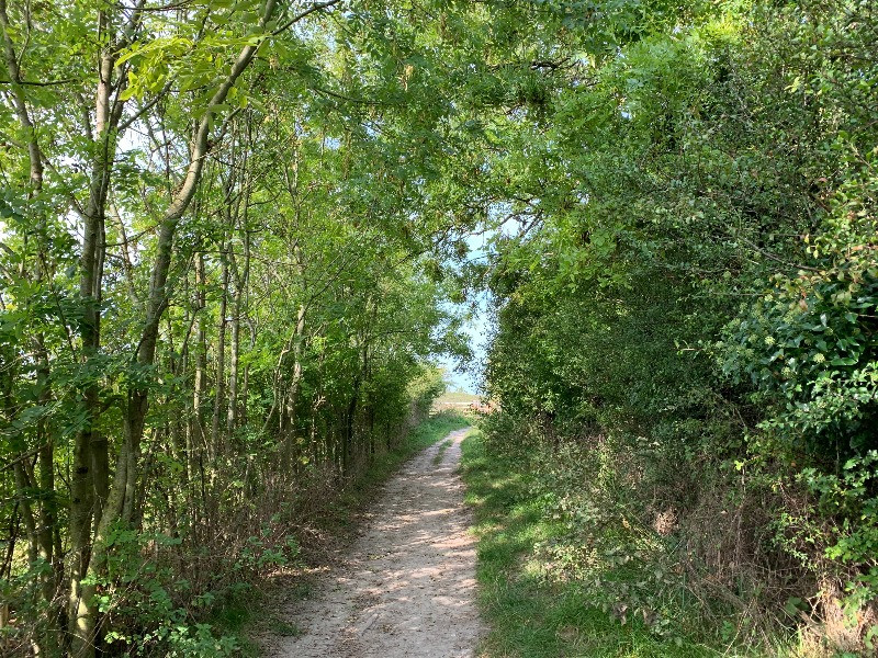 The tree-lined path to Figsbury Ring.