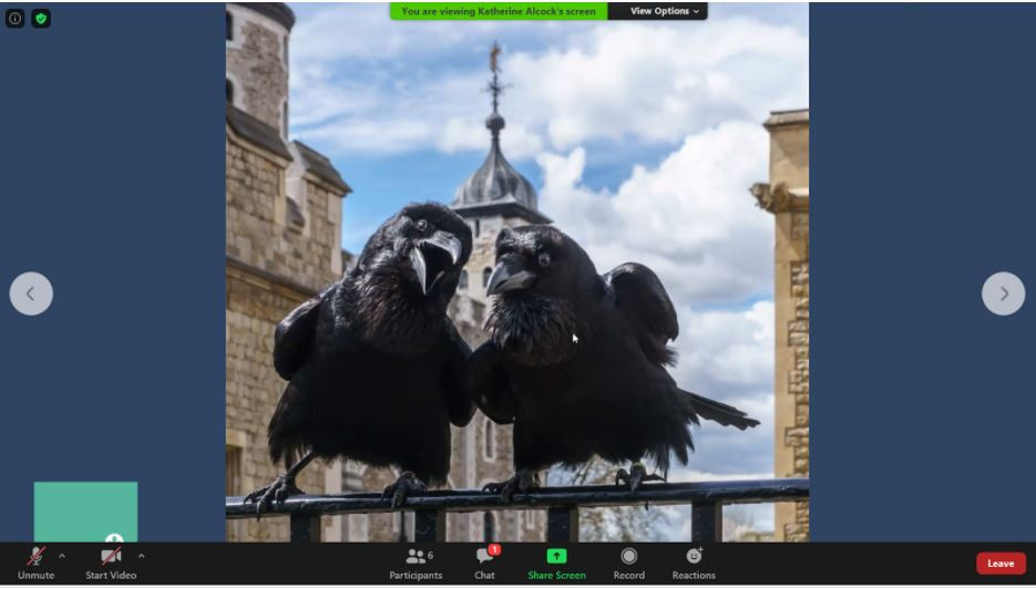 A screenshot fo two ravens from the virtual tour