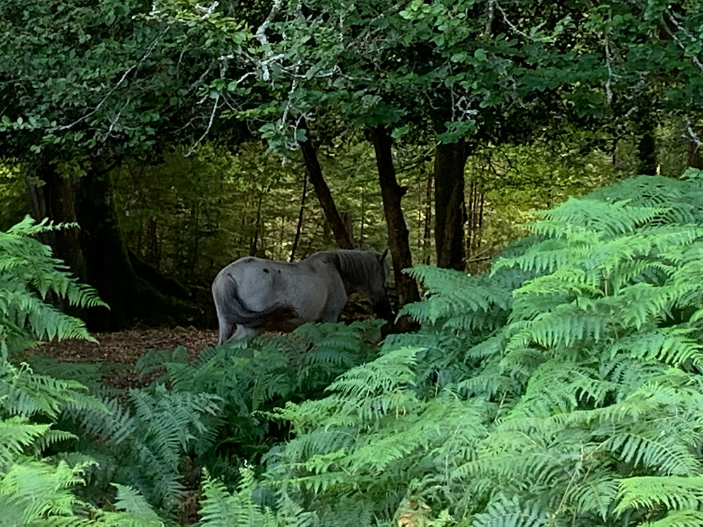 A horse eating amongst the trees in the New Forest.
