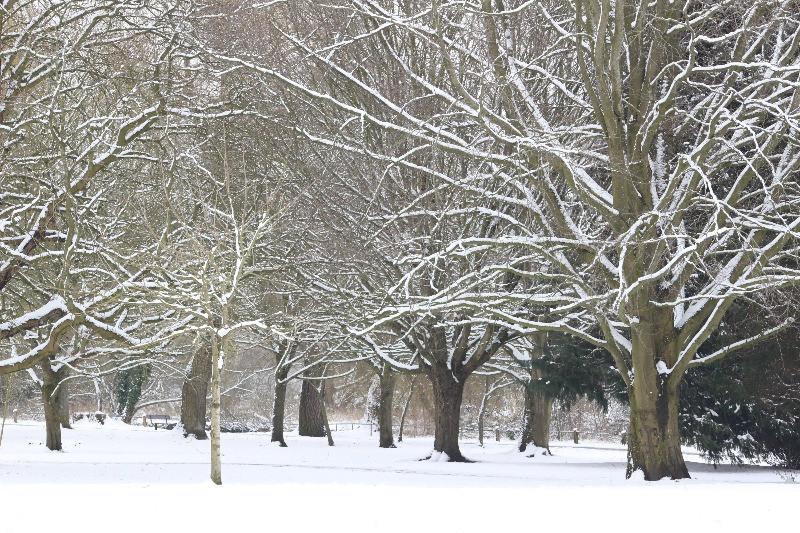Queen Elizabeth gardens covered in snow