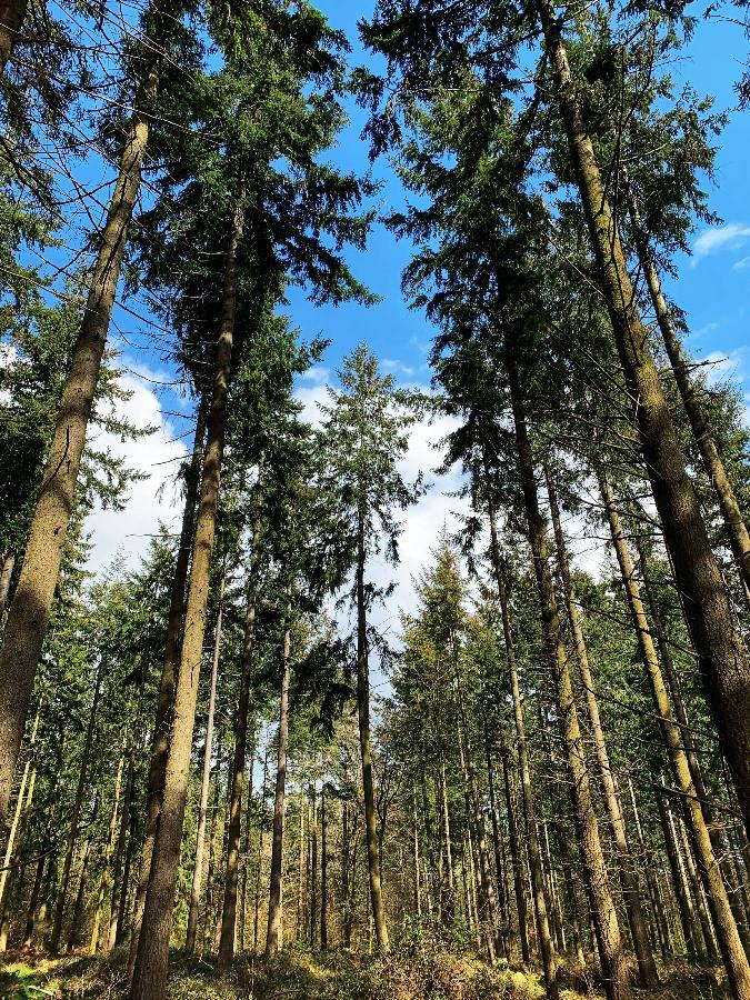 Trees in Grovely Woods