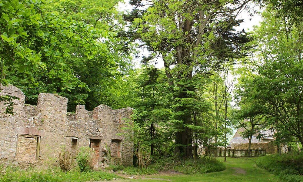 Ruined cottages with trees growig around and in them.
