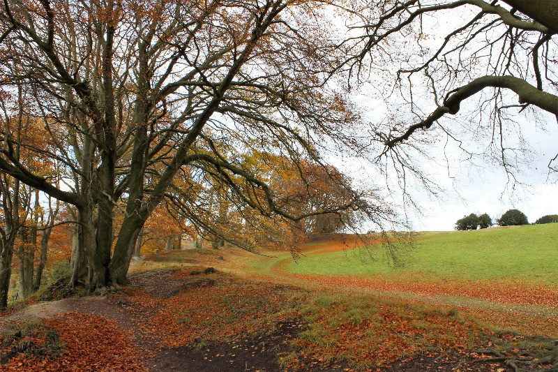 Autumn leaves on the outer rings of Old Sarum