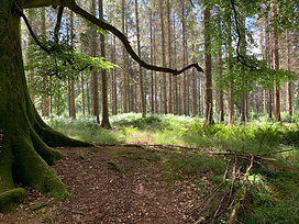 witches-trees-grovely-woods_edited.jpg