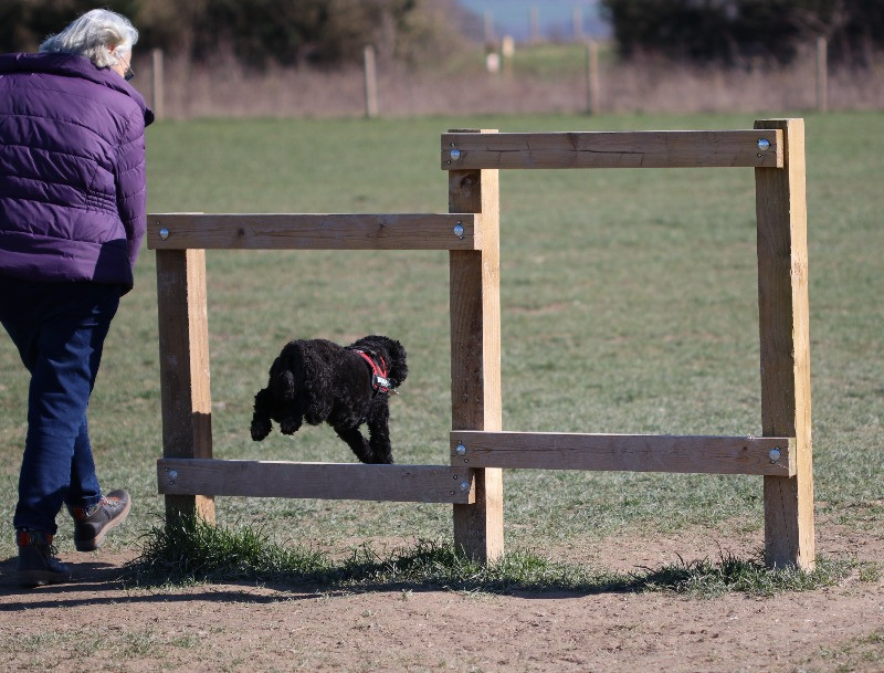 A dog jumping over a hurdle on the dog agility course
