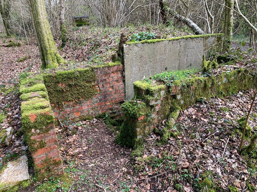 The entrance to an old bunker surrouded by woodland