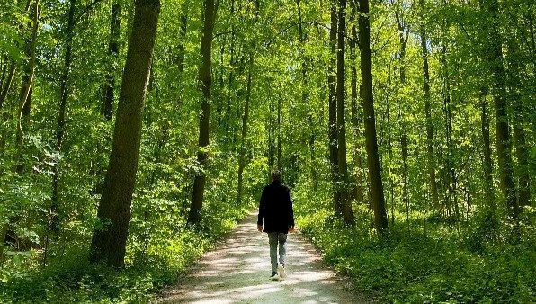 A man walking on a path through a forest.