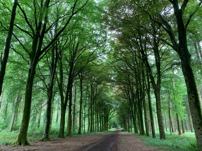 A view down a straight road surrounded by tall green trees.