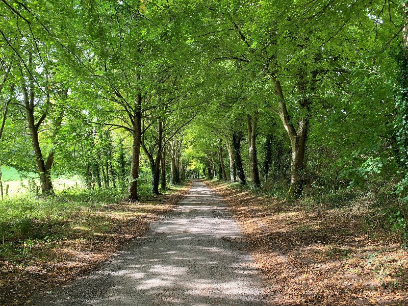 A tree-lined avenue leading to Little Durnford Manor near Salisbury.
