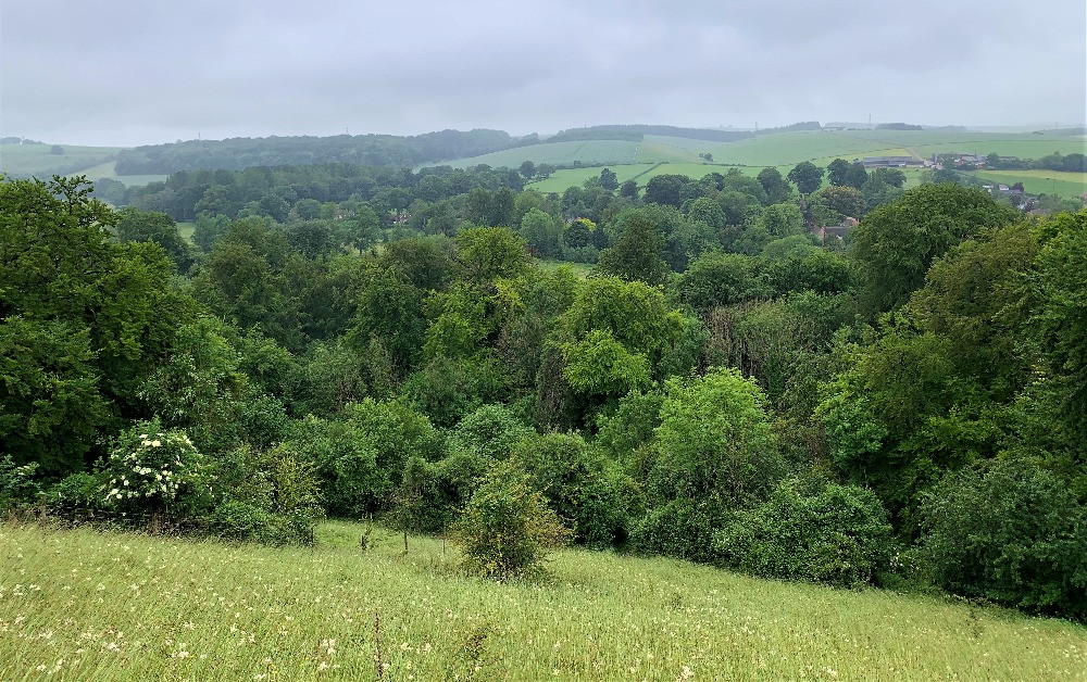 A valley filled with trees and fields in the Woodfords near Salisbury
