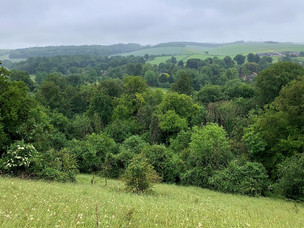 FOREST BATHING IN THE WOODFORD VALLEY