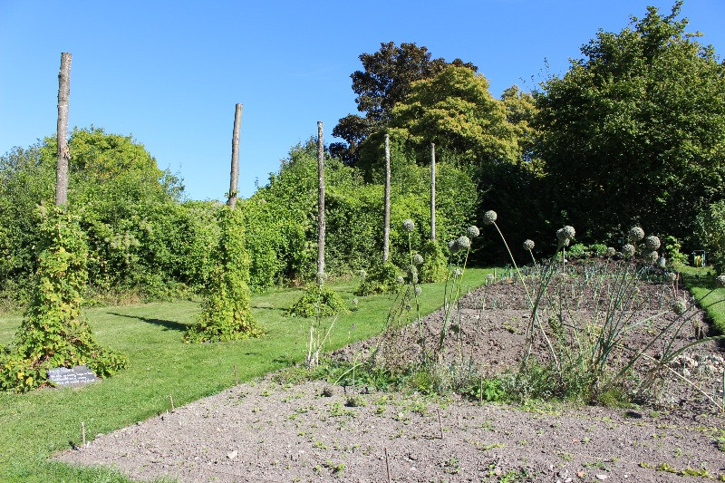 A vegetable patch in the garden