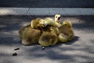Animal photography 6.jpg