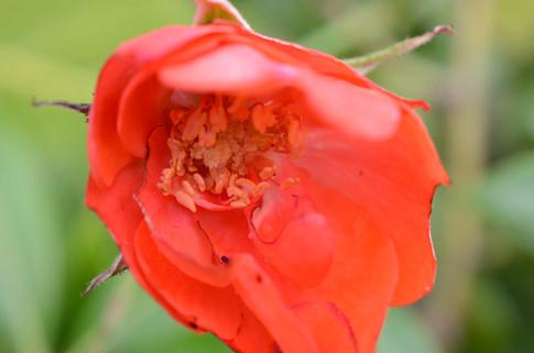 Flower photography 20.jpg