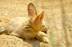 Animal photography 10.jpg