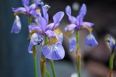 Flower photography 15.jpg