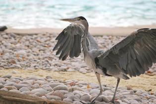 Bird photography 22.jpg