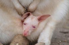Animal photography 17.jpg
