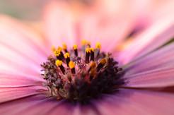 Flower photography 27.jpg