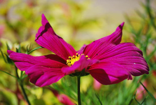 Flower photography 4.jpg