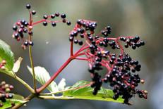 Flower photography 12.jpg