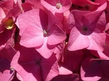 Flower photography 28.jpg