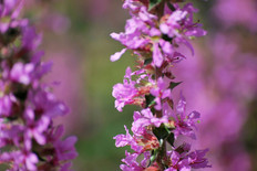 Flower photography 9.jpg