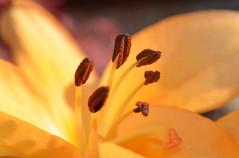 Macro photography 12.jpg