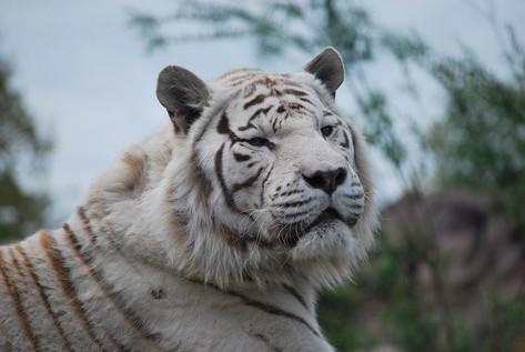 Animal photography 13.jpg
