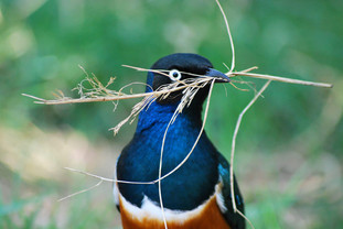 Bird photography 2.jpg