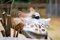 Animal photography 25.jpg