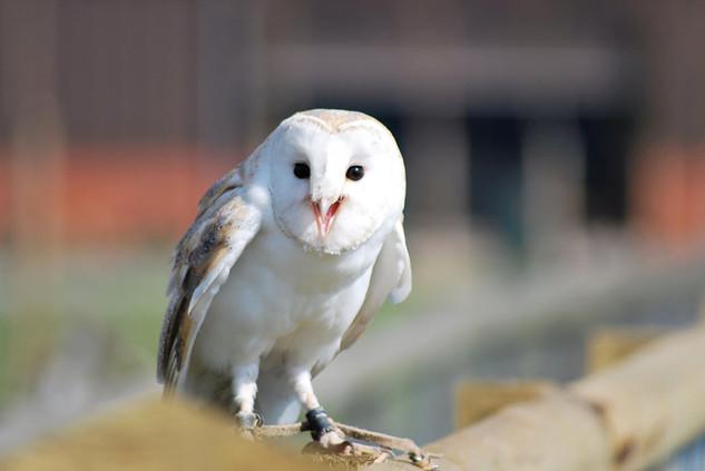 Bird photography 15.jpg