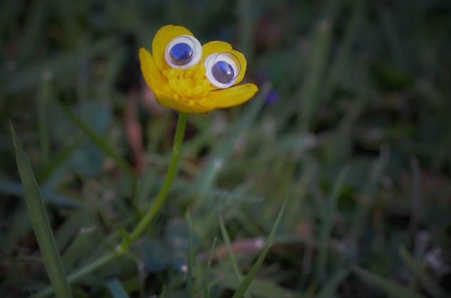 Googly eye buttercup.jpg