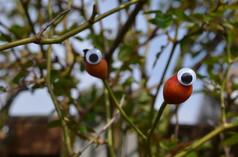 Google eye bud 3.jpg